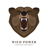 Screaming bear. Graphic design of screaming angry bear head. Text outlined Stock Photography