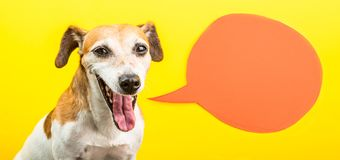 Screaming dog with open mouth. Happy smiling small pet. Speech balloon. Yellow and orange bright cheerful colors