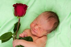 Screaming newborn with rose Stock Images