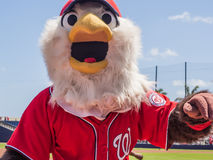 Screech Mascot Washington Nationals Baseball. March 26, 2017 - West Palm Beach, Florida : Mascot Screech walking the field during Spring Training game of stock photos