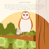 Screech-Owl on the flat tree background Stock Images