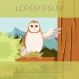 Screech-Owl on the flat tree background Stock Photos