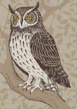 Screech-owl. Realistic screech-owl in forest hand drawn vector illustration vector illustration