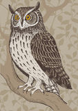Screech-owl Stock Image