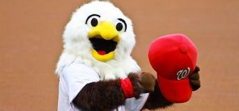 Screech Washington Nationals mascot. Washington Nationals mascot Screech rallies the fans prior to the start of a game Stock Photos