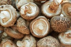 Shiitake mushrooms for background. royalty free stock photos