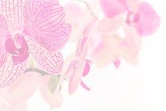 Screensaver av ris som blommar orkidén Arkivbild