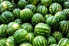Screensaver from green watermelons Royalty Free Stock Photo