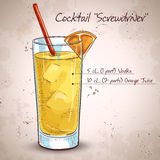 Screw driver cocktail. Screwdriver cocktail with Vodka, Orange juice, Ice cubes, Orange Royalty Free Stock Photos