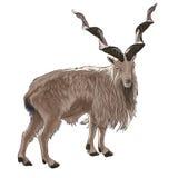 Screw-horned goat Stock Photography