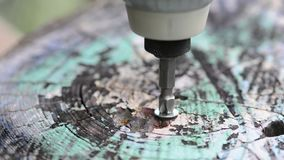 Screw the screw with a drill into the tree.Colorized tree stock footage