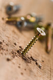 Screw with wood shavings Royalty Free Stock Photos