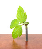 Screw with young sprouts Stock Photo