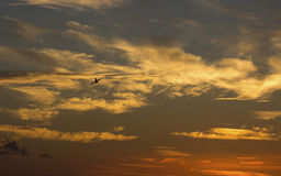 Screwball Sky Royalty Free Stock Images