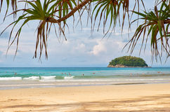 Screwpine op Kata-strand op Phuket-eiland in Thailand royalty-vrije stock foto