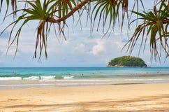 Screwpine på den Kata stranden på den Phuket ön i Thailand Royaltyfri Foto