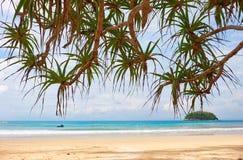 Screwpine on Kata beach on Phuket island in Thailand royalty free stock images