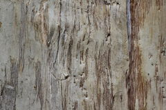 Gum tree bark texture Stock Images