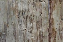 Gum tree bark texture Stock Images