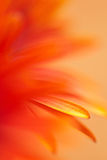 Scribble. Macro abstract of daisy flower petals stock photos