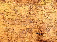 Scribble tree bark texture Stock Photo