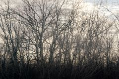 Script of bare branches of trees without foliage against cloudy sky. Dreary winter. Script of bare branches of trees without foliage against cloudy sky. Black Royalty Free Stock Photo