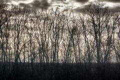 Scritto dei rami nudi degli alberi senza fogliame contro il cielo nuvoloso immagine stock