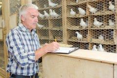 Scrivendo a razze piccione Immagini Stock
