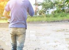 Scrofa dell'agricoltore il riso dei semi in azienda agricola Immagine Stock