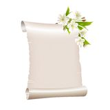 Scroll blank paper with blossoming cherry branch Royalty Free Stock Photo