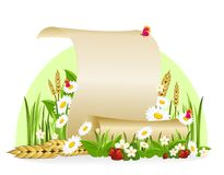 Scroll of paper surrounded by flowers and ears of corn. Background with flowers and ears of corn Royalty Free Stock Photography