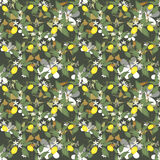 Scroll pattern with lemons, flowers and leaves on green Royalty Free Stock Photo