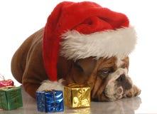 Scrooge del dogo en la Navidad Foto de archivo libre de regalías