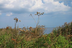 scrub on the edge of Bay of Puck, Poland Stock Photography