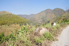 Scrub jungle mountains Stock Photos
