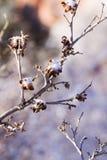 Scrub oak Royalty Free Stock Photos