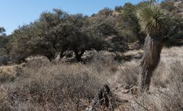 Grant county back country in New Mexico. Scrub Oak, Pine and Yucca abound in the back country of Grant county, New Mexico Stock Images