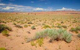 Scrub in Utah Desert Royalty Free Stock Images