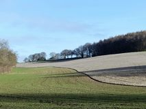 Scrubbs Wood, Sarratt, Hertfordshire. View across field to Scrubbs Wood, Sarratt stock photo