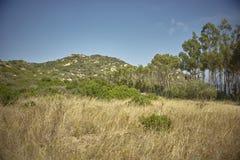 Scrubland и высушенная трава на юге  Сардинии Стоковая Фотография
