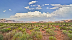 Scrubland do deserto Fotografia de Stock Royalty Free