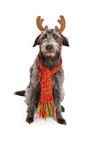 Scruffy Big Terrier With Reindeer Ears Royalty Free Stock Photo
