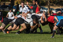 Scrum. Redding, California- November 7, 2015: Blackhawk players and  (black jersey) Shasta players set up for a scrum in a match between Shasta HIghlanders and Royalty Free Stock Images