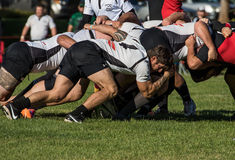 Scrum. Redding, California- November 7, 2015: Blackhawk players and  (black jersey) Shasta players set up for a scrum in a match between Shasta HIghlanders and Royalty Free Stock Photography