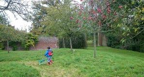 Scrumping para las manzanas el día de Apple Imagen de archivo libre de regalías