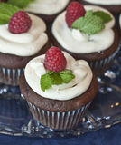 Scrumptious Cupcake Dessert Royalty Free Stock Images