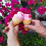 Scrumptious pink. Ice cream and bougainvillea stock images