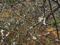 Scrup di inverno Fotografia Stock