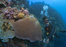 Scuba dive guide shows majestic wall reef Royalty Free Stock Photos