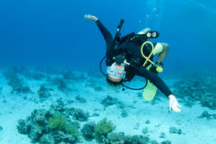 Scuba diver. Diver swims upside down on a dive stock photo